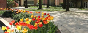 Wesley's beautiful campus, with blooming tulips